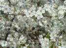 2007-2008-wiosna-na-dzialkach-spacer-14