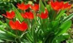 8 marca – kwiaty od najmłodszych