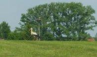 Konkurs Foto ptaki- wiosną