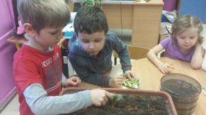 Siejemy nasiona na kiełki