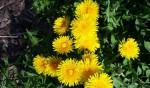 Dzikie wiosenne kwiaty – Tropiciele obserwują