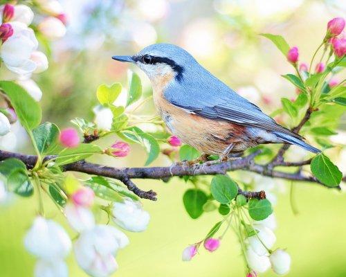 Wiosenne życzenia od uczniów Stojedynki